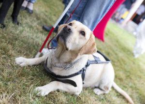 Elderly Care in Lorton VA: Dogs Help with Diabetes